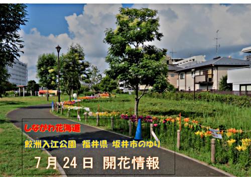 画像 しながわ花海道 鮫洲入江広場 ユリ花壇開花情報