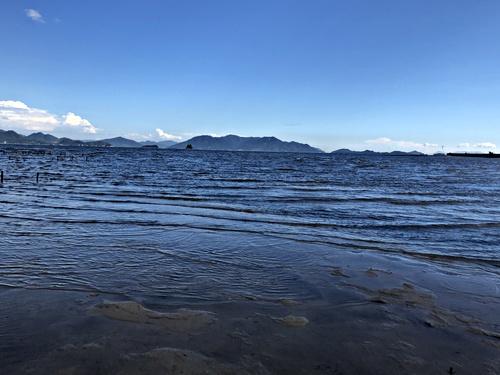 画像 八幡川河口干潟アサリ養殖場整備(8月7日)