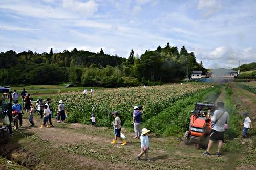 画像 mikke 白いトウモロコシ収穫体験@原田農園 2021.7.25