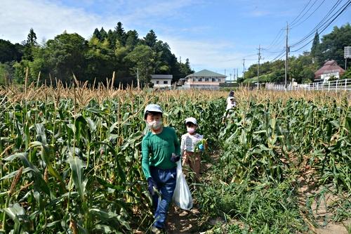 画像 mikke 白いトウモロコシ収穫体験@原田農園 第2弾 2021.8.8