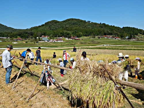 画像 mikke 昔ながらの稲刈り体験 2021.10.3